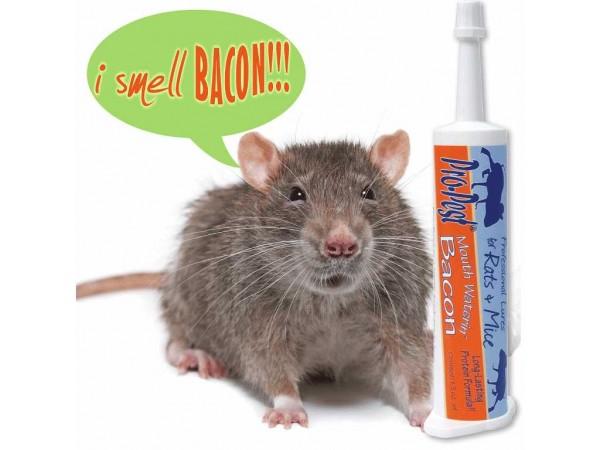 Pro-Pest Rat & Mouse Lure - Prof 32cc Syringe - Bacon Flavored